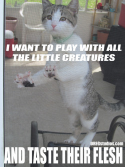 My first #cat #meme with iCKY…