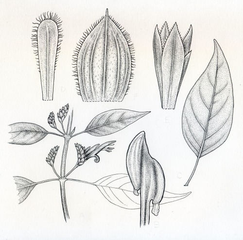 noelbadgespugh:  Botanical Plate For California Academy Of Sciences, WIP, A Few Thousand Dots To Go!
