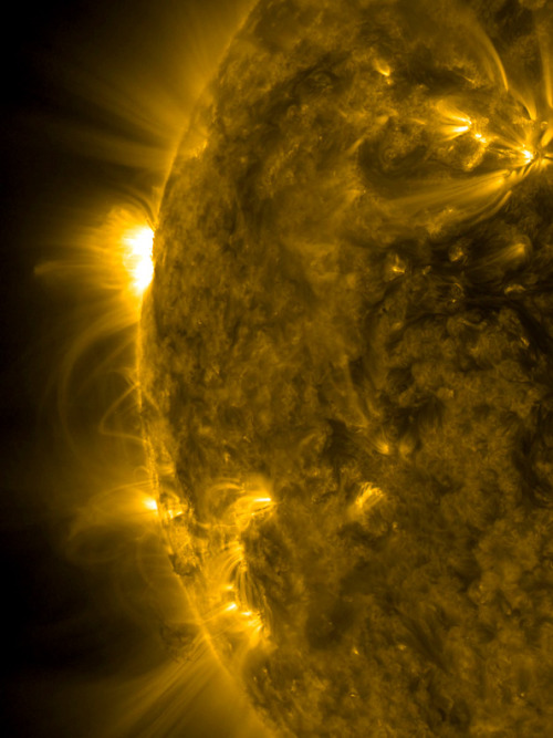 In the Loops     A pair of solar active regions spun up dozens of arching loops above them and extending an estimated 100,000 miles between them as they rotated into view over the period of one day (Mar. 26-27, 2013).      Active regions are areas of intense magnetic forces pushing up from beneath the solar surface. The loops are charged particles spinning along the magnetic field lines as observed in extreme ultraviolet light. Active regions are often the sources of solar storms, so we will be keeping our eye on them.