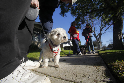 "National Dog Bite Prevention Week begins next week (something we didn't know existed until just a bit ago), and as a prelude to the festivities. the postal service has released a list of the cities with the most reported attacks on postal workers by dogs. And just look at who comes out on top…  From L.A.'s acting postmaster Ken Snavely:  ""If our letter carriers deem your loose dog to be a threat, you'll be asked to pick up your mail at the Post Office until it's safe to deliver.""  Photo: Mark Boster / Los Angeles Times"