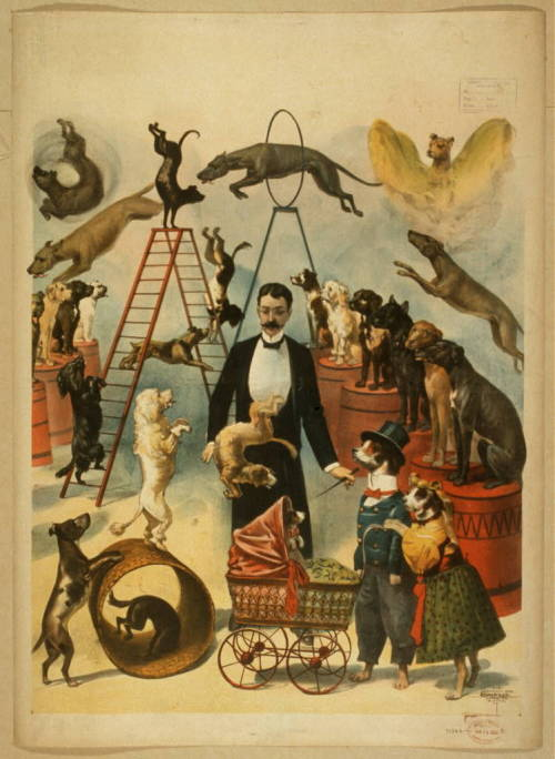 weirdvintage:  Trained dog act poster, c. 1899 (via Library of Congress)