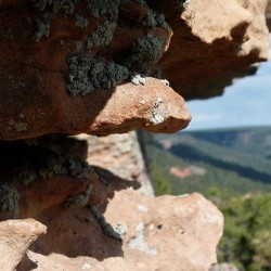 ericiam:  Liken it #liken #MogollonRim #Mogollon #geology #Arizona
