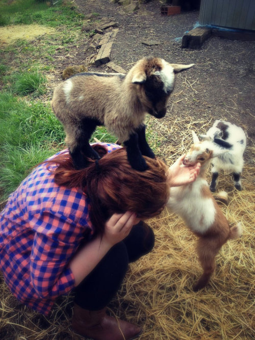 soul-of-a-pioneer:  xjohndeeregirlx:  Went Goat shopping today..This baby girl claimed me as her own before I could even decide.  DA BABIES!!!!