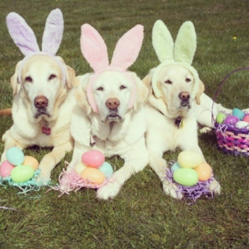 Happy Easter..#dog #easter #love #like #happy #photooftheday #photooftheday #photowall #petstagram #fun