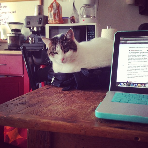 Lucille knows she's not allowed on the table, and she's found a workaround. An evil genius!