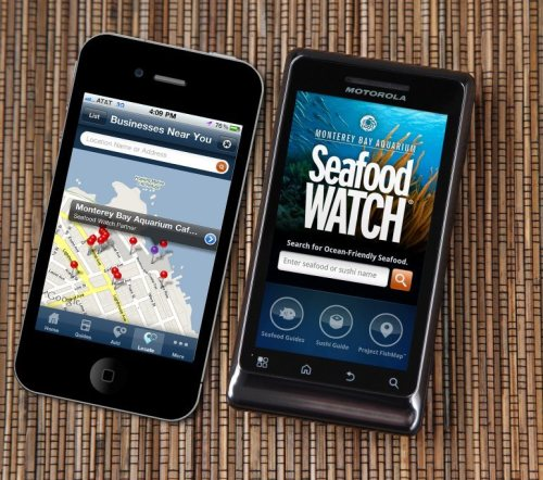 "Great news! The latest round of Seafood Watch updates includes more new and revised recommendations than ever before—everything from wild-caught clams, to oysters, Atlantic flatfish and farmed tilapia. We're most excited about the ""upgrading"" of several species from ""Avoid"" to ""Good Alternative,"" which indicates positive changes for fisheries management. Learn more."