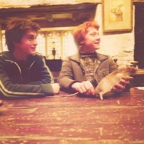 Daniel and rupert. #harrypotter
