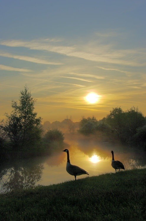 "pagewoman: "" Geese in the Mist by Grunvald """
