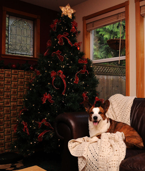 simonsaysbark:  Caleb's turn for a little holiday cheer…