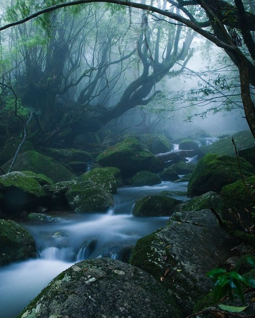 jeou:  mononoke forest, yakushima (屋久島) island, japanalong the kusugawa trail, this is the forest that inspired the settings for the ghibli movie 'princess mononoke'