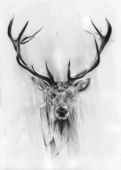 Red Deer by: Alexis Marcoll