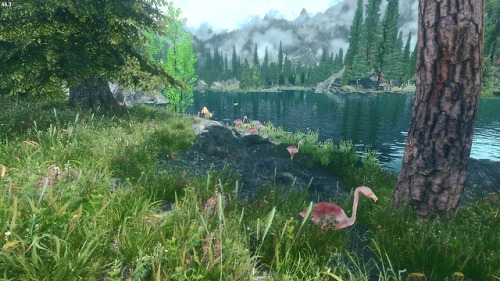 Flamingos in Skyrim (Mihail mods)