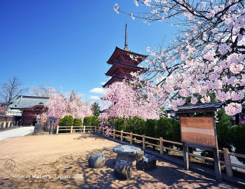 myfictionallifeinjapan:  Images of Japan. (Hirosaki Japan). © Glenn Waters.I am Looking Forward to Spring time.3,900 visits to this photo. Thank you. by Glenn Waters ぐれんin Japan. on Flickr.