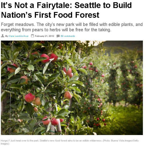 "rawlivingfoods:  Seattle's vision of an urban food oasis is going forward. A seven-acre plot of land in the city's Beacon Hill neighborhood will be planted with hundreds of different kinds of edibles: walnut and chestnut trees; blueberry and raspberry bushes; fruit trees, including apples and pears; exotics like pineapple, yuzu citrus, guava, persimmons, honeyberries, and lingonberries; herbs; and more. All will be available for public plucking to anyone who wanders into the city's first food forest. ""This is totally innovative, and has never been done before in a public park,"" Margarett Harrison, lead landscape architect for the Beacon Food Forest project, tells TakePart. Harrison is working on construction and permit drawings now and expects to break ground this summer. The concept of a food forest certainly pushes the envelope on urban agriculture and is grounded in the concept of permaculture, which means it will be perennial and self-sustaining, like a forest is in the wild. Not only is this forest Seattle's first large-scale permaculture project, but it's also believed to be the first of its kind in the nation. Read More"