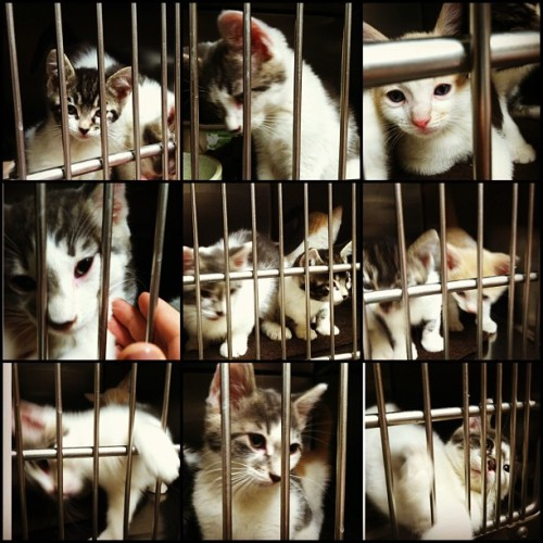 Went to the animal shelter today and fell in love with these little babies. ❤😻 #kitten