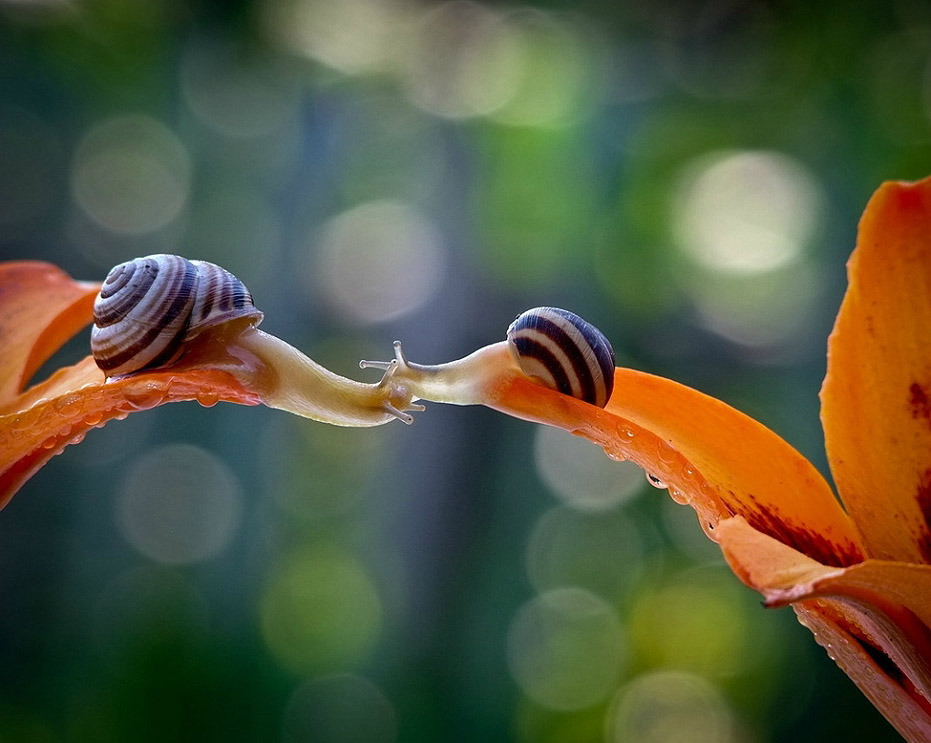 taktophoto:  Tale of nature from Vyacheslav Mishchenko  I like snails.