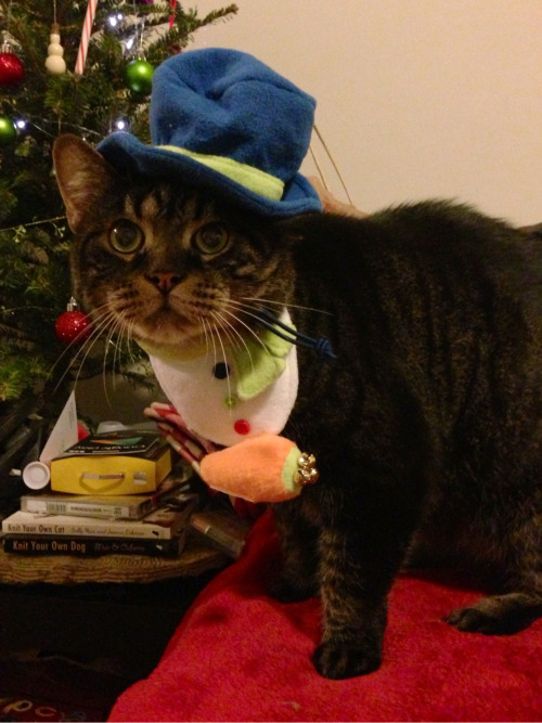 milkglassmao:  Christmas items were half off at Target, so George has gained a snowman costume. He should be happy that I didn't buy him the striped sweater.