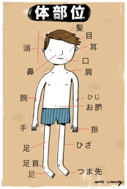 mikelowerystudio:  parts of the body in japanese.