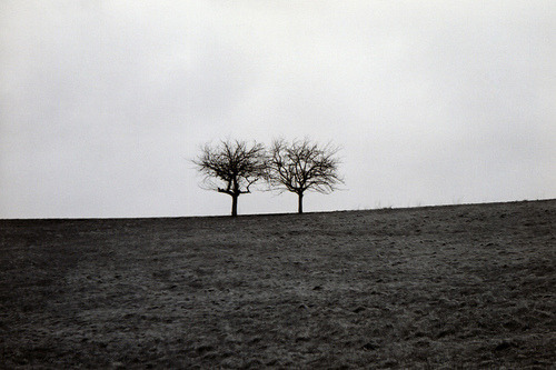 two trees by katersocks on Flickr.