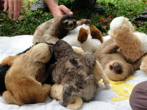 animalswithstuffedanimals:  Sloths and their teddys.