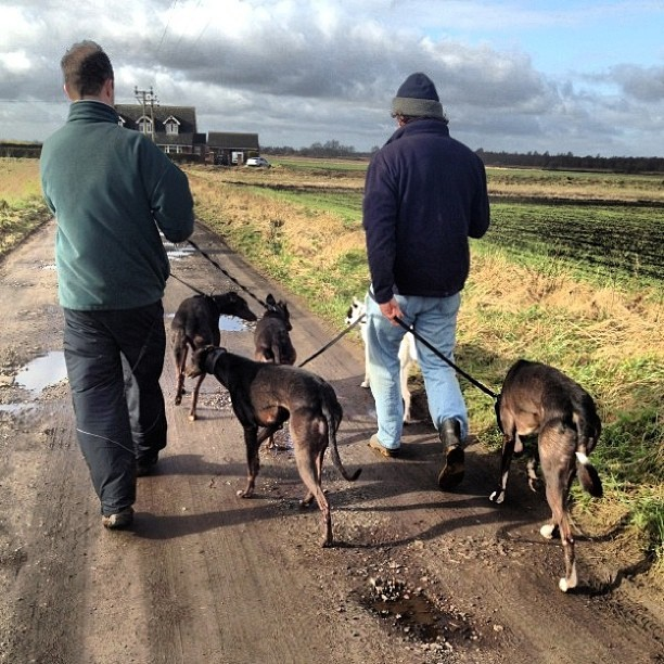 #greyhound walk