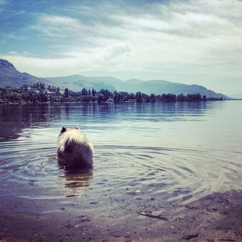 Water dog… NOT! #HDR #notjoke (at Osoyoos Lake, BC)