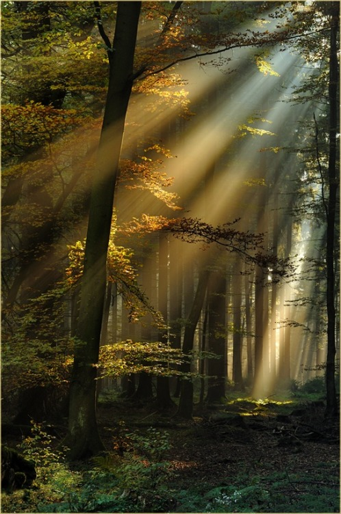 Sun Rays, Black Forest, Germany photo via rachel