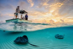 Stingray sandbar. Photo by Thomas Pepper. Source.
