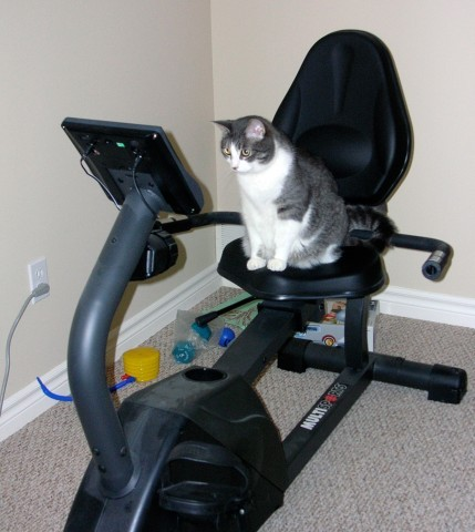 CAT SPENDS 40 MINUTES EACH DAY ON EXERCISE BIKEby The Fluffington Post  http://bit.ly/12ECZX9