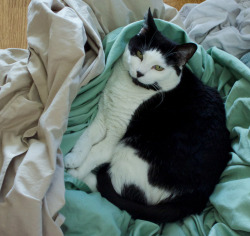 itsfullofcats:  L is for Laundry and also for Lounging
