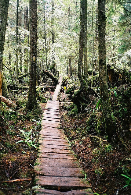 travelingcolors:  Boardwalk, West Coast Trail | Canada (by Ben D. Johnson)