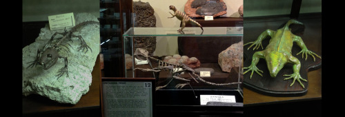 12/12 News from the Neighborhood Fossil Museum: separated at birth edition (photo credit: J.A. Ginsburg / CC BY-NC-ND /@TrackerNews)