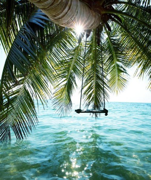 island-mango:  Tropical blog