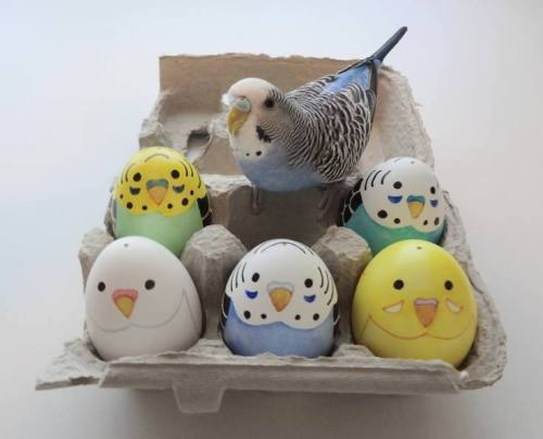 cute adorable kawaii animal eggs bird pet egg parakeet budgie easter parrot easter eggs happy easter
