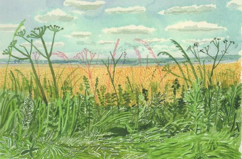 rachela100:  David Hockney, Yorkshire - midsummer roadside plants and landscape, Watercolor, 2004