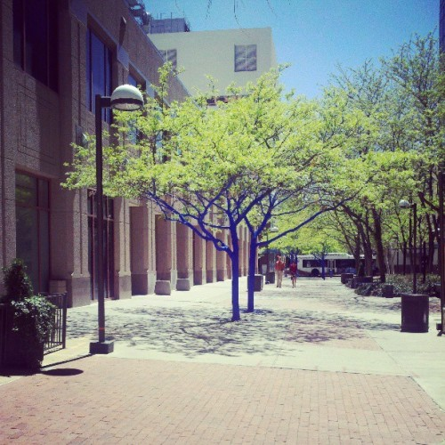 Blue trees down town? Oh I love,this city.