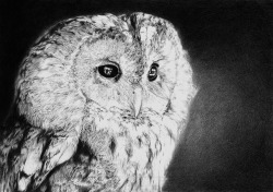 fer1972:  Owl Drawing by Christine Wheat