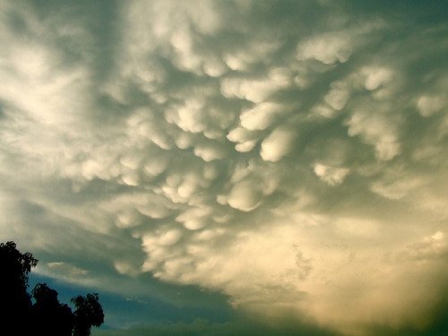 "vurtual:  Puffy patterns of mammatus cloudsOut of all the cloud types, only one kind derives from the Latin term for ""udder"": Mammatus clouds. And when you see them, this meteorological name makes a whole lot of sense. They billow downwards in a pattern of distinctive lumpiness that peg them as fascinating subjects to photograph. Keep tuned in to weather reports for thunderstorms, because these puffy clouds usually indicate intense storms to come and you might find a rare opportunity to capture them. Photos from Stormlover87, Jon Wisniewski, finepixtrix, Rodtas, and Alexander Photography."