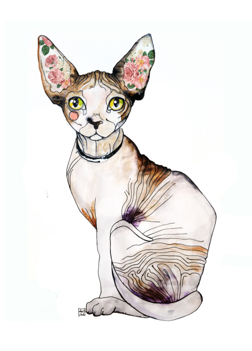 saraligari:  Sara Ligari more sphynx cat here!