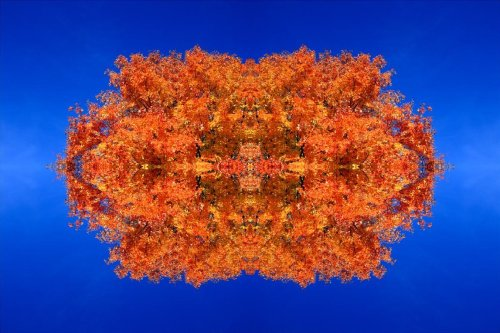 Fractal Fall, 2008I had a final composition like this in mind when I shot the orange canopy of this tree. Flipped one shot horizontally and vertically in 4 different layers and upped the contrast and shifted the blue hue about 15 points darker. Ended up being a 120MB Tiff file that i flattened and exported from in Lightroom to become a 34MB jpeg. And then this one I posted.   ** and yes I know it's not technically a Mandelbrot-esque fractal.