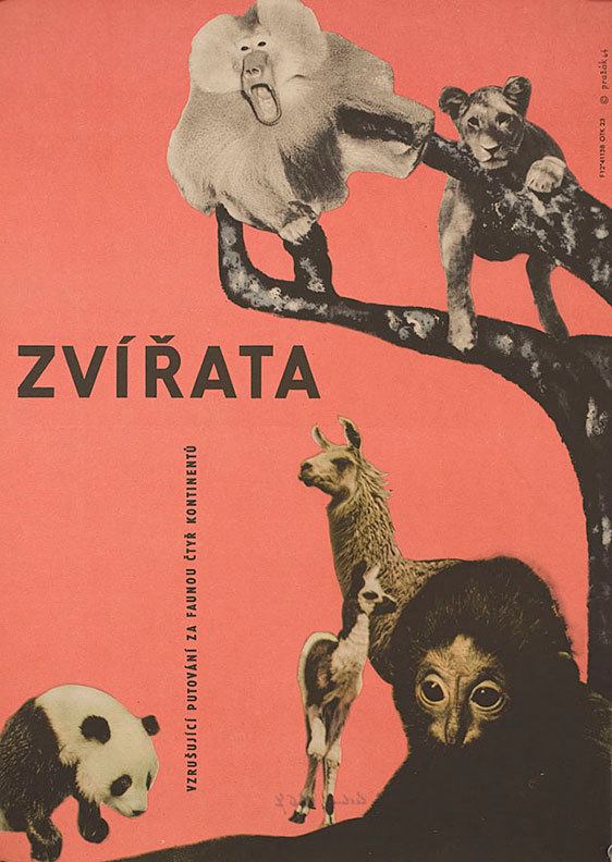 movieposteroftheday:  1964 Czech poster for LES ANIMAUX (Frédéric Rossif, France, 1964) Designer: Cenek Prazák (1914-1996) Poster source: Posteritati