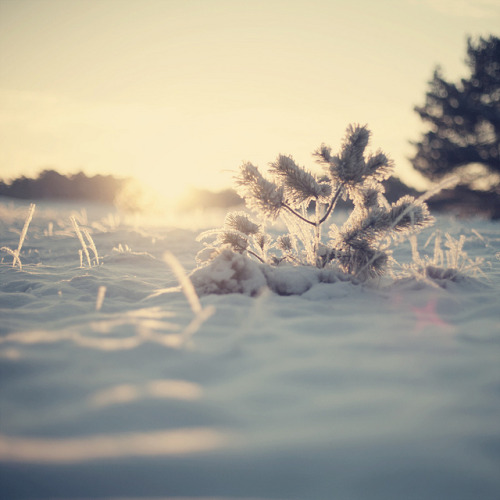 Sun & Snow by Morphicx on Flickr.
