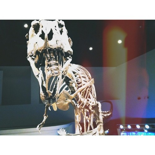 Tyrannosaurus rex at @themindmuseum of Bonifacio Global City, Taguig, Metro Manila. Reminds me of Jurassic Park! Blog post coming up! Stay tuned at http;//www.thetravelingnomad.com  #geek #science #museum #manila #adventures #dinosaurs