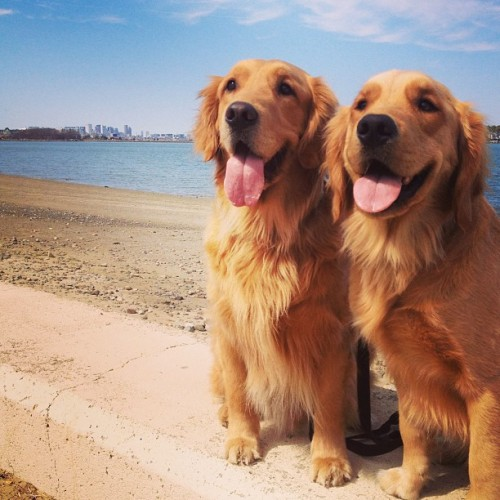 lifelillypursuitofhappiness:  Happiness is… precious puppies.