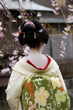 geisha-licious:  maiko Kotoha with chu shimada hairstyle by ONIHIDE on Flickr