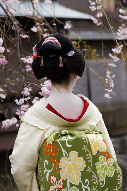 geisha-licious:  maiko Kotoha with chu shimada hairstyle by ONIHIDE on Flickr  maiko break from all the recipes! her outfit is super cute and pretty!