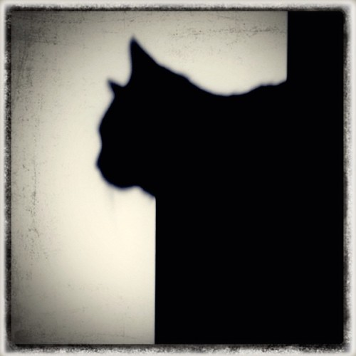 The hunter. #cat #shadow #monochrome #bnwbutnot #catnamedtwain #hunter