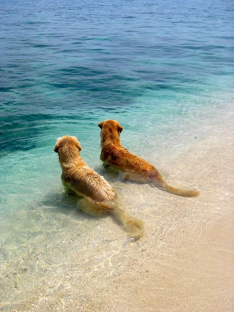 xoxoamandamarie:  my dog would love the beach…