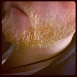 afightersheart:  Newsflash: #beardy #beard is #ginger