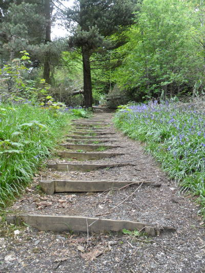 vwcampervan-aldridge:  Steps through the Bluebells, St Lawrence's Wood, Mancetter, Leicestershire, England All Original Photography by http://vwcampervan-aldridge.tumblr.com